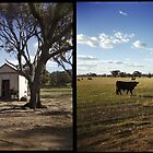 In the country by Melissa Drummond