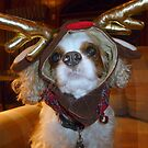 "Molly, our ""Reindeer Dog"" by Nanagahma"