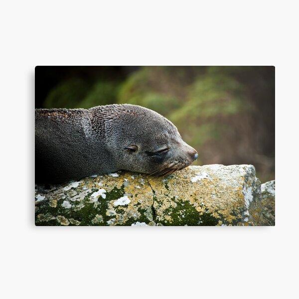 Seal Snooze Metal Print