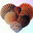 Seashell Heart by Robin Black