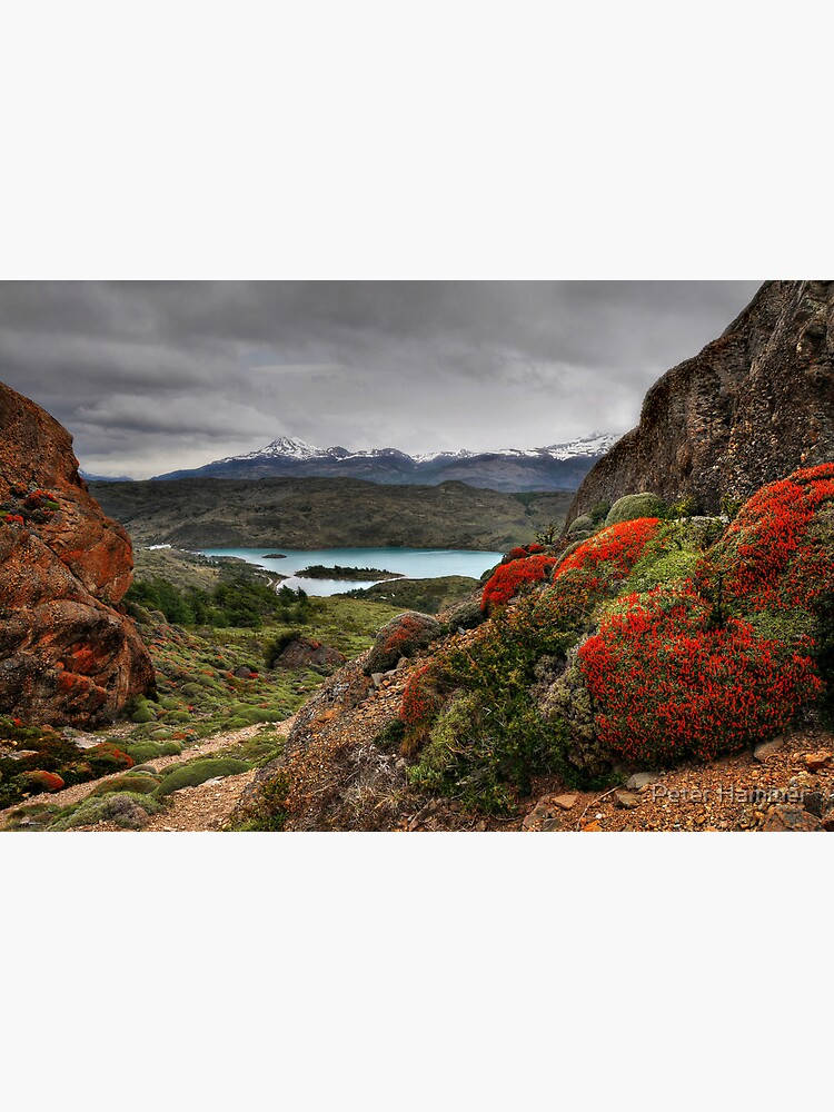 Flame Bushes, Laguna and Mountains by PeterH
