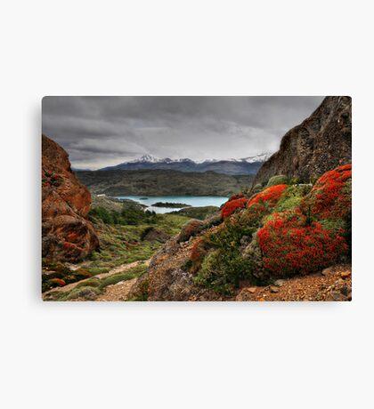 Flame Bushes, Laguna and Mountains Canvas Print