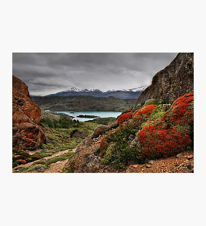 Flame Bushes, Laguna and Mountains Photographic Print