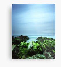 """Beachular Mosstrophy"" ∞ Barragga Bay, NSW - Australia Metal Print"