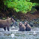 Alaskan Grizzly with Cubs by Bruce Alexander