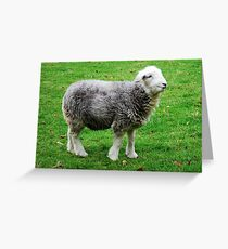 Herdwick, the cutest there is! Greeting Card