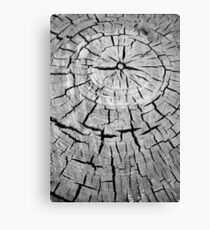 crack and annual rings of a tree Canvas Print