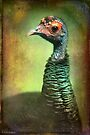 Finer Feathered Friends- Occelated Turkey by alan shapiro