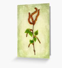 Silver Birch Flowers Greeting Card