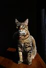 This Is My Serious Look! by jodi payne