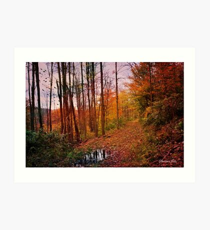 Somewhere in Time ~ A Logging Trail Art Print