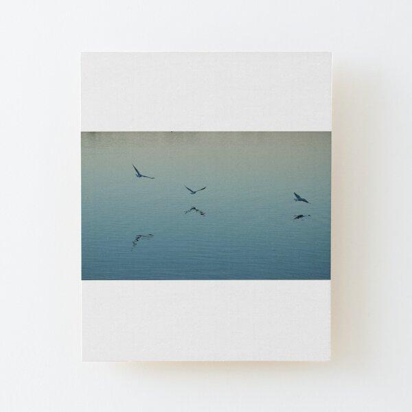 Three gulls on a lake Wood Mounted Print