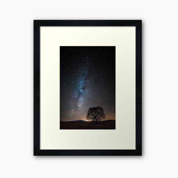 Many Stars, One Tree Framed Art Print