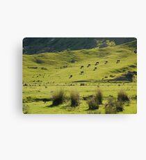 New Zealand farm land Canvas Print