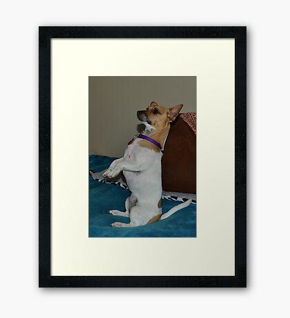 My meerkat dog Framed Print