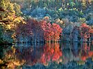 Fall Spicified by Carolyn  Fletcher