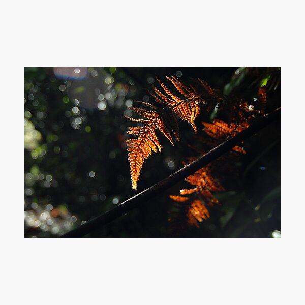 Backlit Autumn Leaves Photographic Print