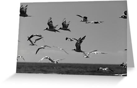 Flight Over Newcastle Baths by Daniel Rankmore