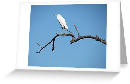 Watching Egret by Chris Andruskiewicz