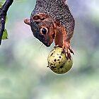 Bobbing For Apples by John Absher