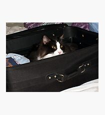If I hide in here, maybe I can sneak on the vacation with you.... Photographic Print