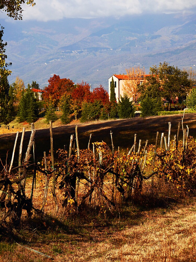 Autumn in Tuscany by Rae Tucker