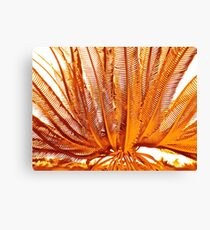 THE EVOLUTION LILY Canvas Print