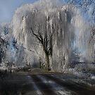 Winter Enchantment  by Johanna26