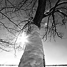 Where the Sun Don't Shine by Jessica Bradford