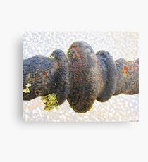 ... and in the decay lies beauty Metal Print