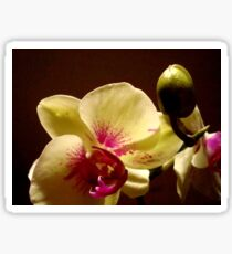 ORCHID - phalaenopsis II   ^ Sticker