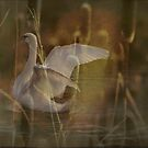 What's in your cattails  by NewfieKeith