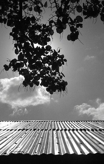Sea Grape Silhouette by AnalogSoulPhoto