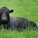 Garrett the Bull by Colleen Drew