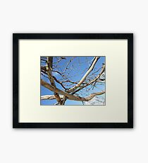 Branch out, Byron Bay Framed Print
