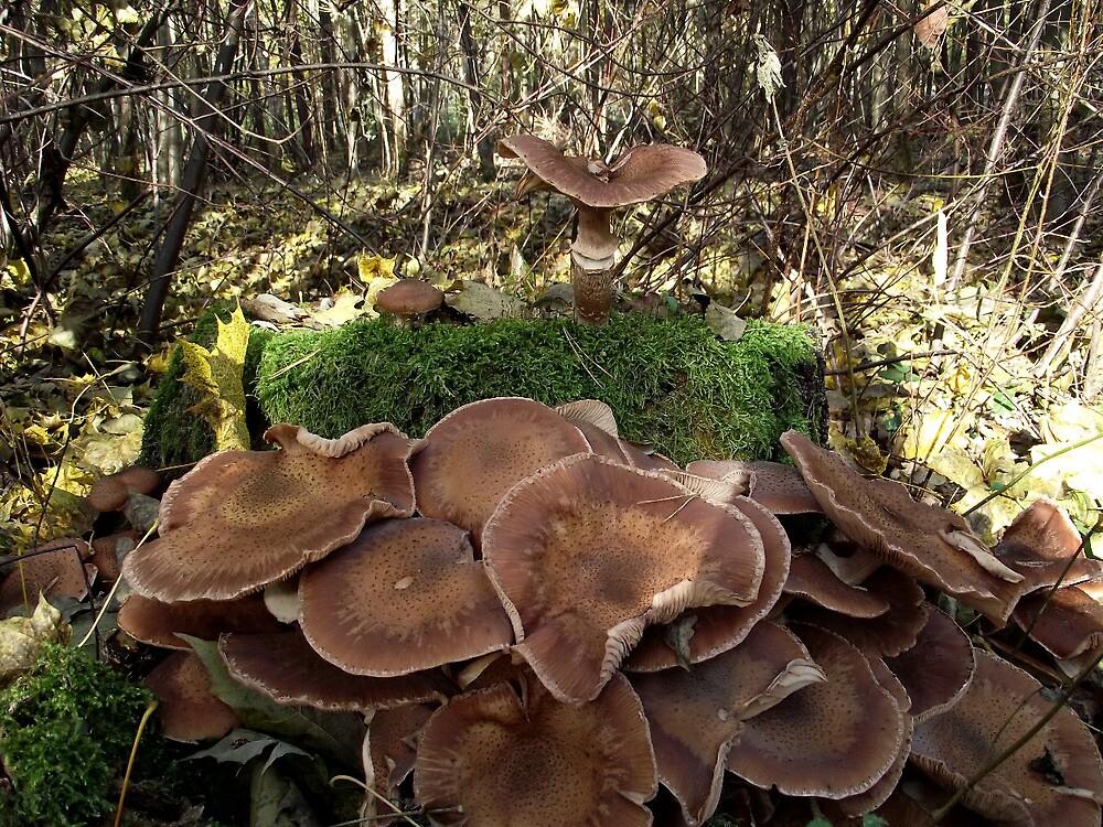 Mushrooms and Moss on Tree Stump by SophiaDeLuna