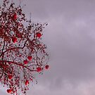 Hearts in the Tree by Ross Jukes