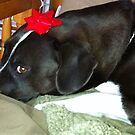 Dog With Christmas Bow by betsy8897