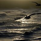 Flying with the Gulls by mikebov