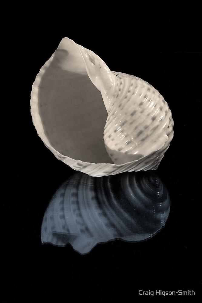 Shell Study by Craig Higson-Smith