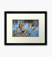 Water Brush Framed Print