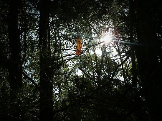 leaf in tree by tonilucas
