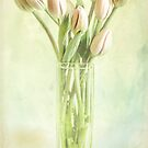 Watercolour Tulips by Margi