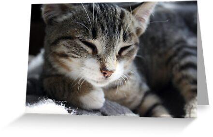Kitty Dreams by garigots