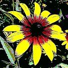 colorful flower by deegarra