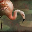 The Flamingo by swaby