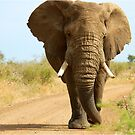 I'M RIGHT BEHIND YOU! - THE AFRICAN ELEPHANT – Loxodonta Africana von Magriet Meintjes