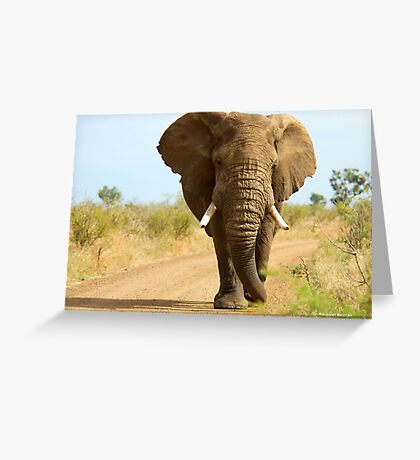 I'M RIGHT BEHIND YOU! - THE AFRICAN ELEPHANT – Loxodonta Africana Greeting Card