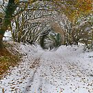 Further Up The Lane by relayer51