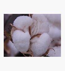 COTTON for the BOWL Photographic Print